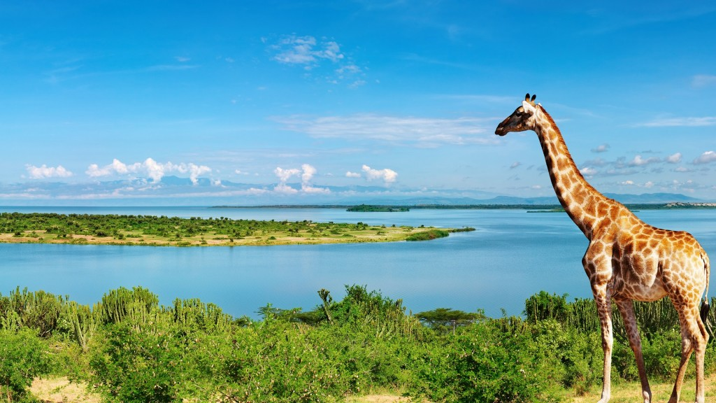 Giraffe at Nile River