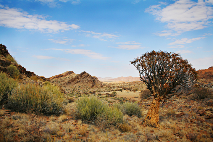 the san of the kalahari desert The kalahari desert is an arid and semi-arid area, over four times the size of great britain, stretching over most of botswana,  the san people, .