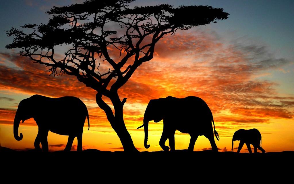 Elephant Hair Bracelet Africa Facts