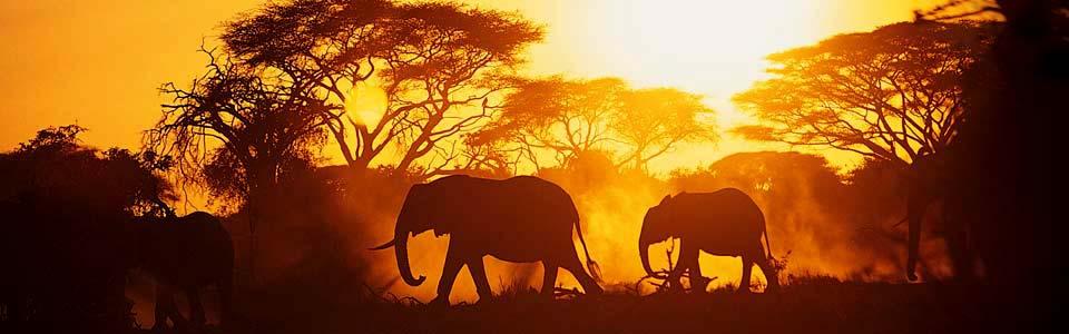 Africa foto