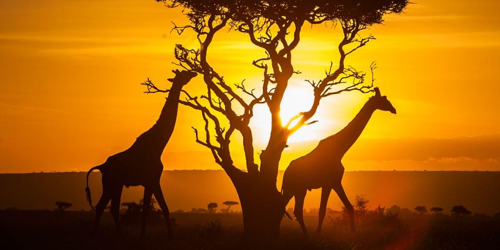 Facts About the Mazai Mara Park of Kenya